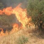Brucia l'Aspromonte e la Calabria ma dobbiamo reagire!