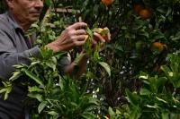 GOEL inaugura il suo stabilimento di confezionamento biologico nella Locride